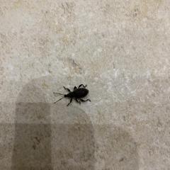 Черный жук в квартире
