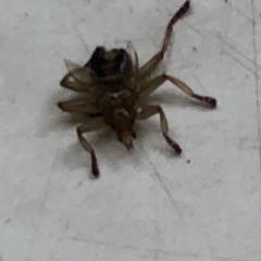 Помогите определить что за насекомое?