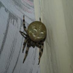 Здравствуйте!  У себя дома обнаружил этого паука, Размер примерно сантиметра три. Всё остальное на фото