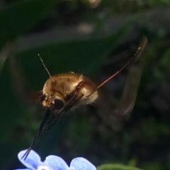 Мохнатое, летающее, с хоботком