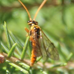 Оранжевое насекомое вокруг ели