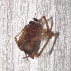 это насекомое укусило в квартире