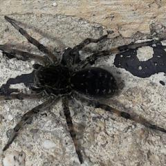 Черного цвета, размером 3-4 сантиметра...