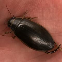 Опознать жука