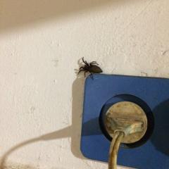 Помогите определить, что это за насекомое