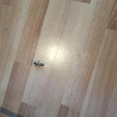 Что за насекомое