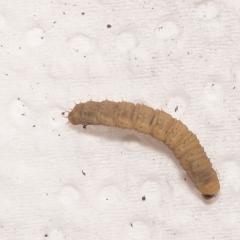 Гусеницы в перегное