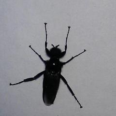 Что за муха ?