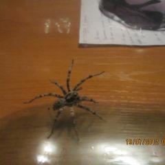 Что это за паук?