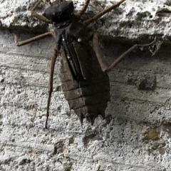 Что за жук?