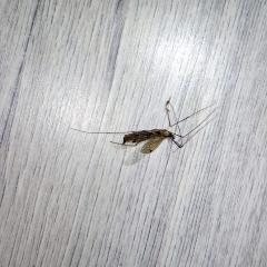 Летающие насекомое