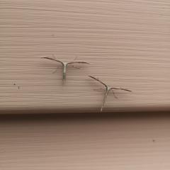 Что за насекомые?