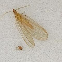 Насекомое , размер 1,5 см, нашла на даче на окне зимой