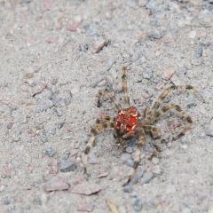 Был найден на солнечной дорожке паук