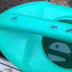 За один день буквально эти насекомые заполонили  теплицу. Сидят везде- на лейке (на фото), на стенаХ, на Растениях