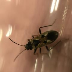 Помогите определить насекомое!
