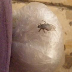 Что за насекомое такое?
