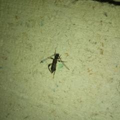 появились жуки с усами и крыльями