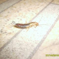 таракан, гусеничнообразные