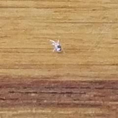 Мелкое насекомое