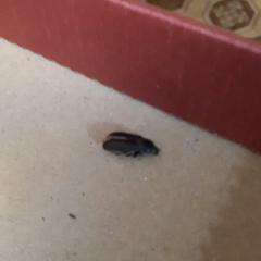 В квартире завелись жуки
