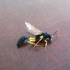 вроде пчела?
