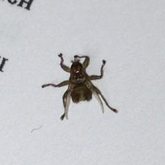 Насекомых, в квартире нет. Кроме, изредка, нескольких комаров летом.