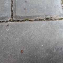 Скопления непонятных насекомых во дворе