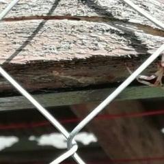 Паук с белой (или желтой) спиной и черной полосой на этой спине. Лапки полосатые. Найдет в Наро-фоминс. области.