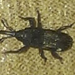 Помогите опознать насекомое
