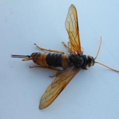 Вылетел из-под кресла на открытой веранде и летал близ пола.