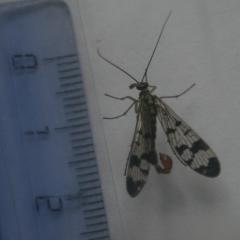 муха или мотылек?