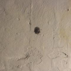 Скопление маленьких коричневых палочек