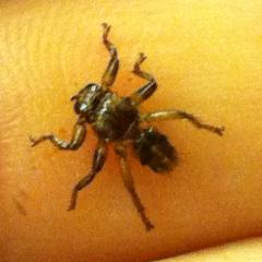 Непонятное насекомое