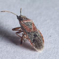 На фото насекомое при большом увеличении
