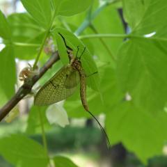 Что это за насекомое? Встретилось сегодня в лесу.