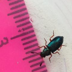 Помогите определить, что за жук